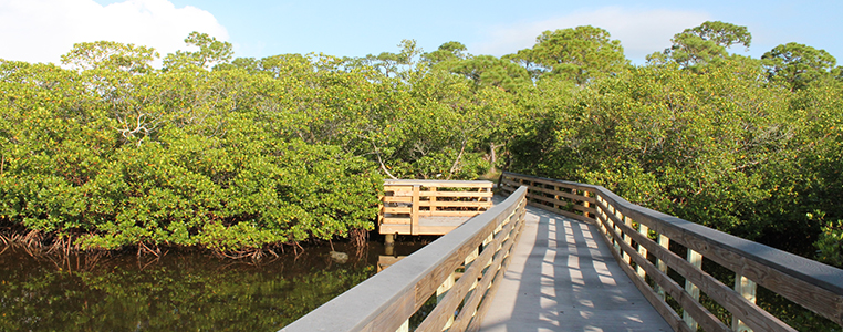 Oyster Creek Environmental Park Bridge