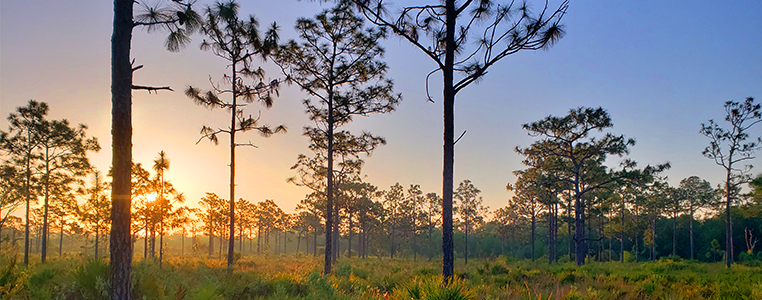 Shell Creek Preserve Sunrise